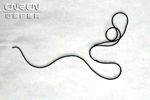 中国广播网 浙江玉环发现传说中 铜丝蛇