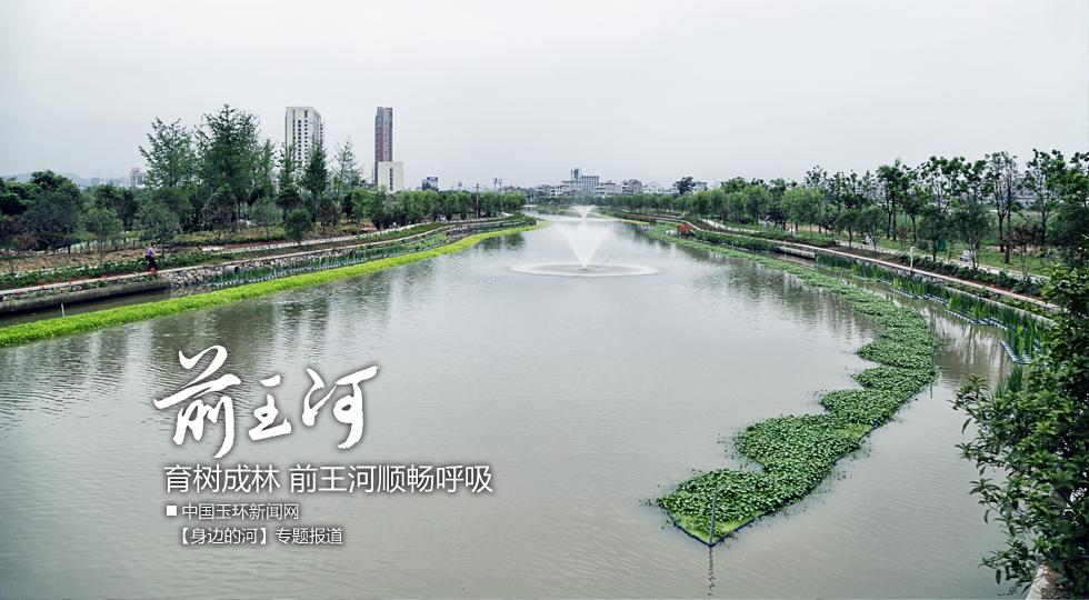 【身边的河】育树成林 前王河顺畅呼吸